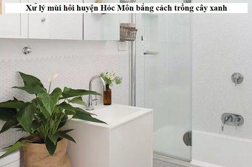 Xử lý mùi hôi huyện Hóc Môn bằng cách trồng cây xanh